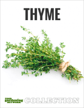 Thyme Collection