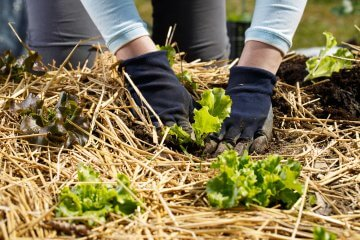 The Best Plants for Straw Bale Gardening