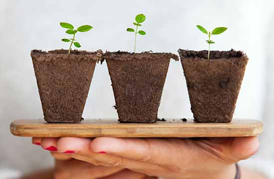 Food Gardening Network Daily