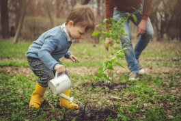 Watering Fruit Trees: When to Do it, and When to Avoid it