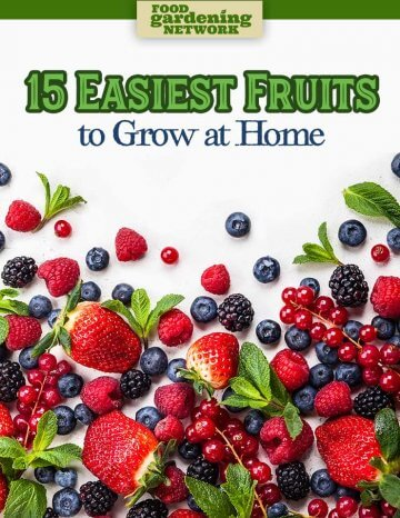 15 Easiest Fruits to Grow at Home