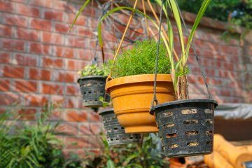 5 Vegetables You Can Grow in Hanging Baskets on a Porch