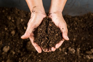 Peat-Free vs Peat-Based Compost: Which is Better?