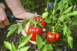 How to Choose the Best Garden Shears for the Job