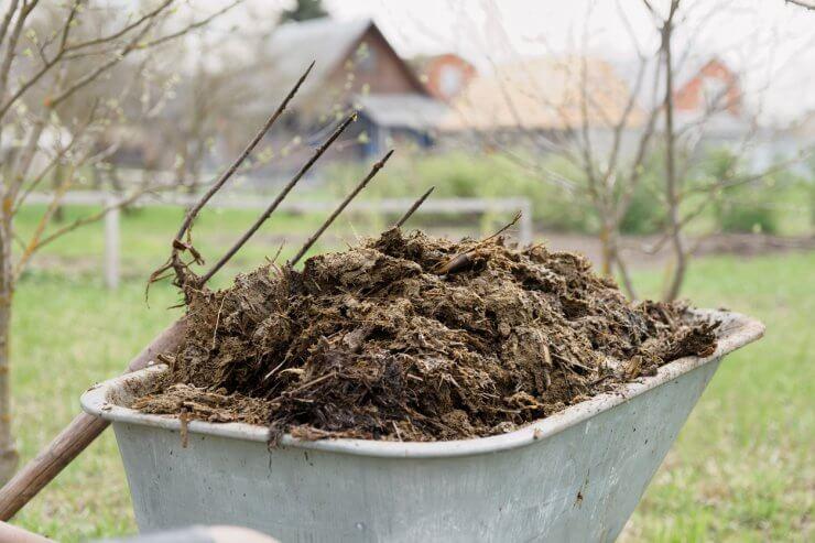 adding manure to garden