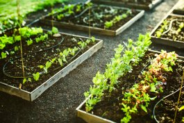 How to Make a Homemade Garden Irrigation System