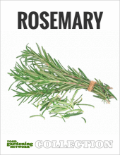 Rosemary, the All-Purpose Herb