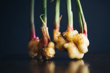 All About Planting and Growing Ginger Indoors