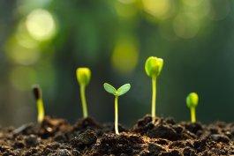 The Beginner Gardener's Seed Germination Temperature Chart