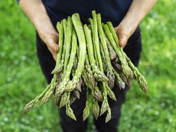 A beautiful fresh harvest of asparagus