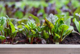 The Best Months to Be Starting a Veggie Garden from Seed