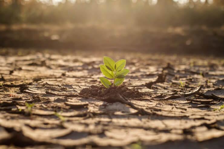 drought resistant vegetables