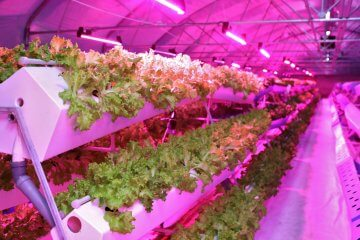 5 of the Best Plants for Aeroponic Vegetable Gardens