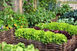 Self-Watering Garden Bed Ideas to Harvest More and Water Less