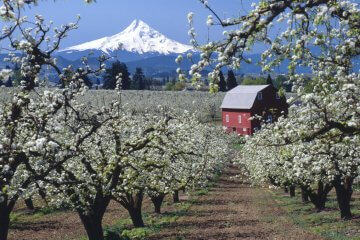 7 Tips for Cloning Fruit Trees to Expand Your Orchard for Free
