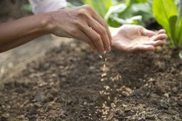 What's the Charles Dowding Multi-Sowing Seeds Method?