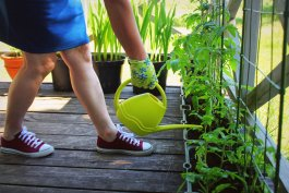 The 6 Best Containers for Container Gardening