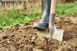 7 Tips for Preparing Clay Soil for Planting Vegetables