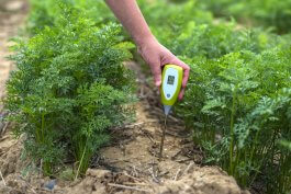 5 Tips for Testing Soil pH in Vegetable Gardens