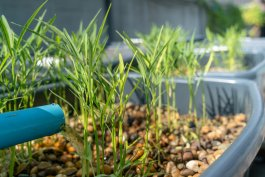 How to Create an Aquaponic Herb Garden with Mason Jars