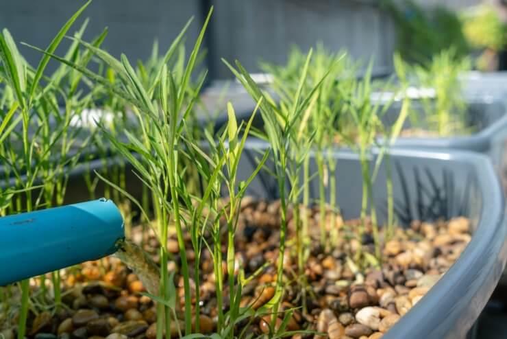 aquaponic herb garden