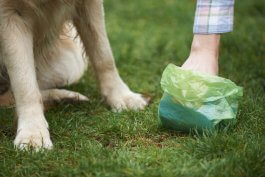 Can You Compost Dog Poop?