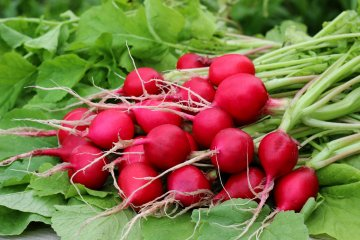 The Best Vegetables for Container Gardening in Tough Planting Zones