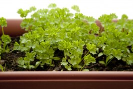 7 Tips for Successfully Growing Vegetables in Window Boxes