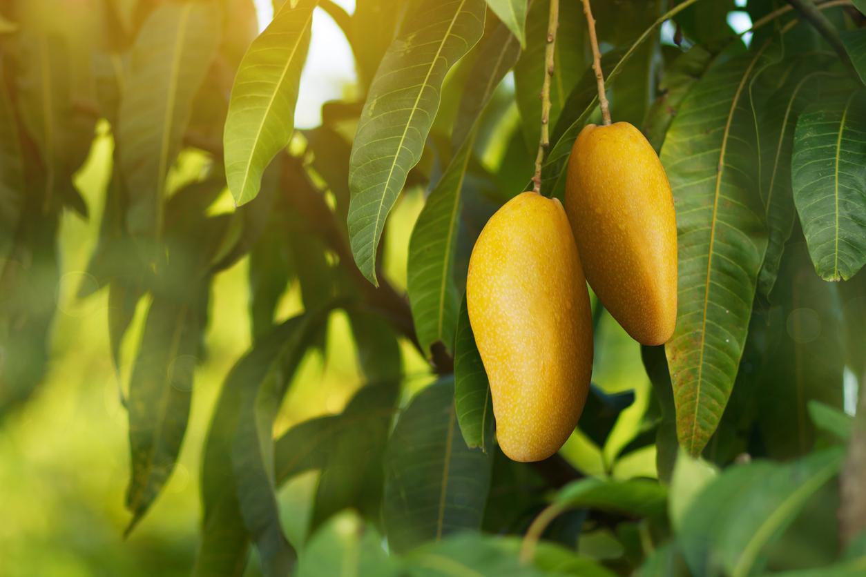 tropical fruit plants