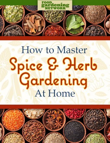 How to Master Spice and Herb Gardening at Home