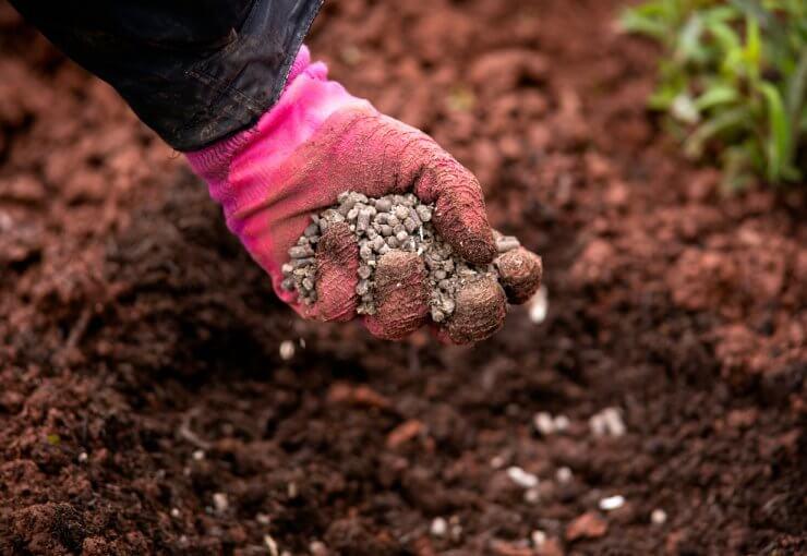 using manure in vegetable gardens
