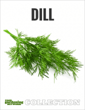 Dill Collection