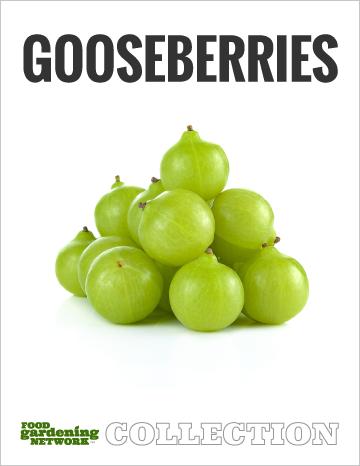 Gooseberries Collection