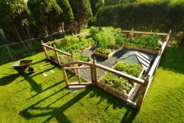 10 Enclosed Vegetable Garden Ideas for Every Budget