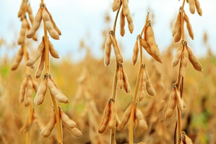 5 Tips for Saving Vegetable Seeds for Next Year's Garden