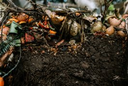 Can Compost Go Bad? Plus 5 More Facts About Composting