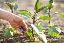How to Fertilize Container Vegetables for Best Results