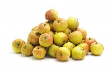 Cox's Orange Pippin Antique Apple