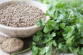 Nutrition Facts about Cilantro