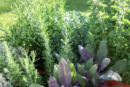 9 Heat-Tolerant Herbs That Grow Well in Hot Climates