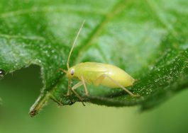 How to Avoid 7 Hydroponic Pests and Diseases