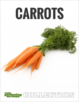 How to Know When Carrots are Ready to Harvest: 5 Signs to Look For