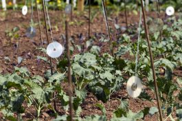 The Best Garden Decoys That Actually Work to Deter Pests