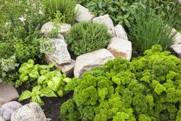 Stone vs. Mulch: Which is Better for Edging Edible Gardens?